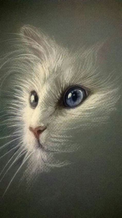 green eye blue eyed cat sketch  pretty cat drawings
