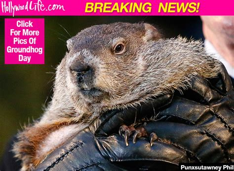 groundhog day yearly results did groundhog see his shadow today find out what