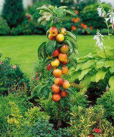 Faire Pousser Un Cerisier à Partir D Un Noyau by Pommier Trio Greff 233 Sur Tige Fruits L 233 Gumes Bakker