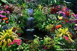 Tropical Flower Garden Canada Flower Garden Flower ดอกไม Garden สวน Florists Flora Plant Tree Blossom National