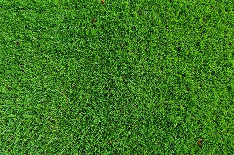 background rumput free photo grass turf lawn background free image on