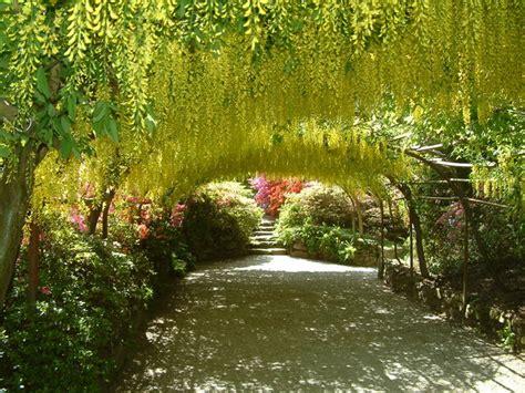 Bodnant Garden Laburnum Arch Bodnant The Of The Garden That S How The Light