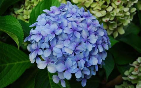 List Of Garden Flowers With Pictures Garden Hydrangea The 10 Garden Flowers That Can Sell Your Property Gardening