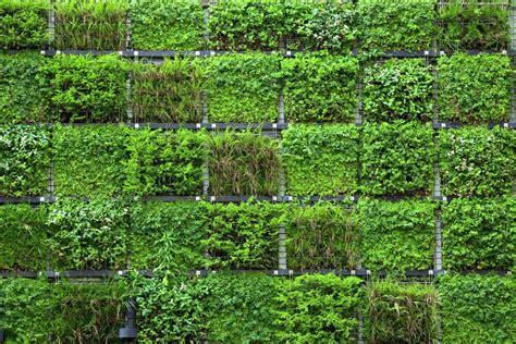 Vertical Garden Systems Wall Gardening Green Wall Garden