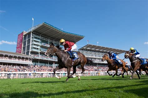 york racecourse york racecourse voted best track in britain