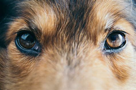 what colors can dogs see vision can dogs see color or in the dogtime