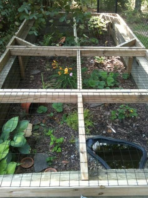 backyard turtle habitat 25 best ideas about turtle habitat on pinterest