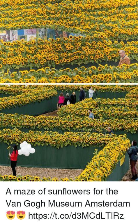 amsterdam museum flowers van gogh sunflowers original painting museum flowers healthy
