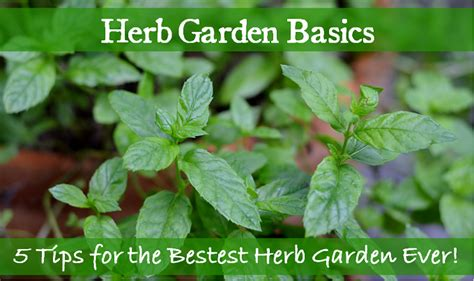 herb garden basics herb garden basics 5 tips for the bestest herb garden redeem your ground