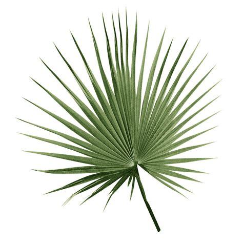 Leaf Print set of three botanical palm leaf prints by georgie st