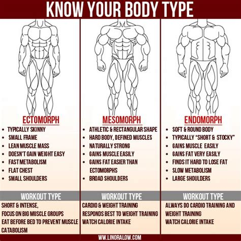 workout plans for men to build muscle at home ectomorph body type fitness program how to get big when