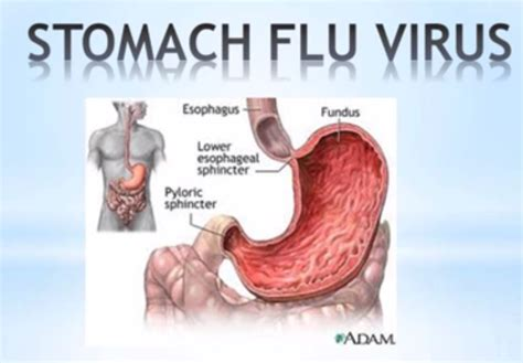 stomach virus symptoms of gastric flu things to worry about in toddlers and adults