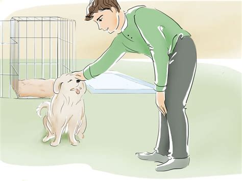how to potty your in an apartment how to potty a puppy in an apartment via wikihow gt gt gt