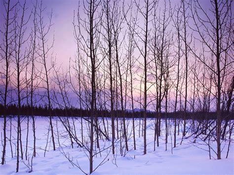 winter tree winter trees introdekatelyn