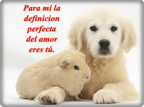 imagenes de amor chistosas con animales 45 im 225 genes de gatos y perros con frases chistosas y