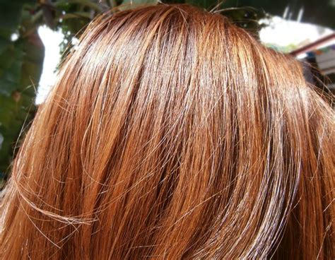 brown hair dye shades honey chestnut copper purple golden reddish brown the latest trends in women39s