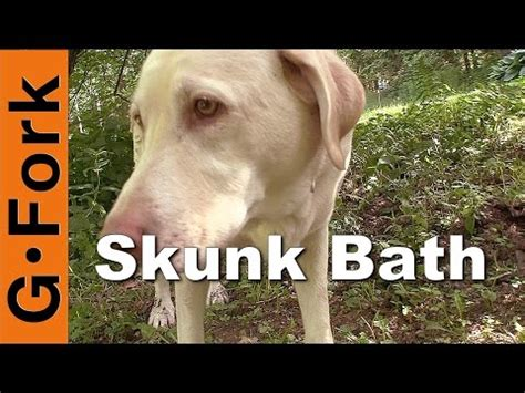 puppy breath smells like skunk why does my stink even after bathing funnydog tv