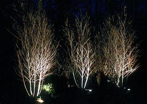 tree light design landscape lighting colorado