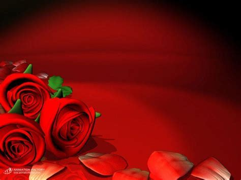 red rose love wallpapers wallpaper cave red rose flower backgrounds wallpaper cave