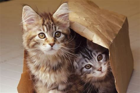 our cats are stressed one in five suffer from anxiety as they don t like living with other