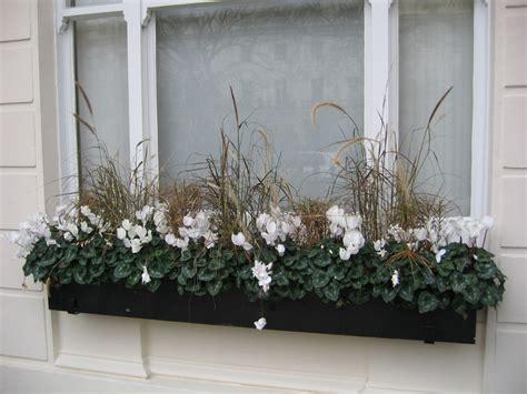 fiori invernali da esterno piante da fiori invernali fiori invernali che non possono