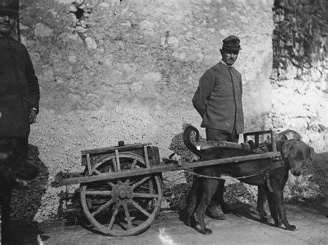 war dogs iz 17 best images about italy vintage photos 1914 1918