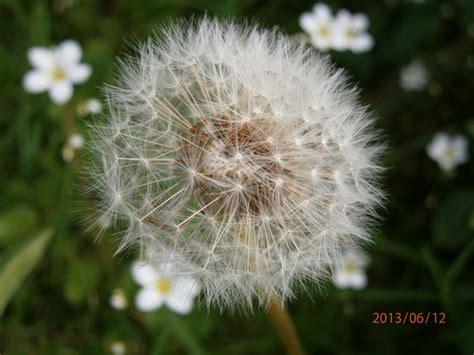 Pflanzen Für Den Gartenteich 990 by Plaudereien 252 Ber Zimmerpflanzen Und Andere Sch 246 Ne Dinge