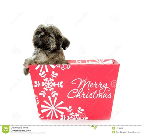 puppies in a box shih tzu shih tzu puppy in box royalty free stock images image 27712409