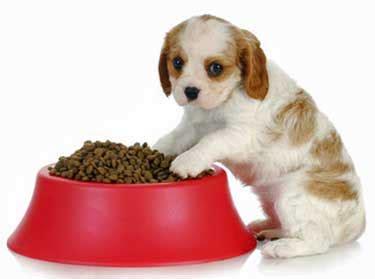how often do i feed my puppy puppy feeding guidelines