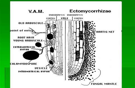 Fisika Dasar Ed 2 By dasar dasar ilmu tanah klasifikasi mikoriza