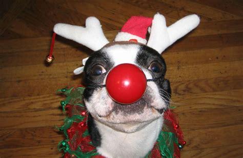 fotos comicas navideñas fotos chistosas de perros en navidad para facebook