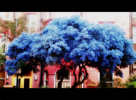 Trijee Blue peaceful blue tree cinematic edit newton flickr