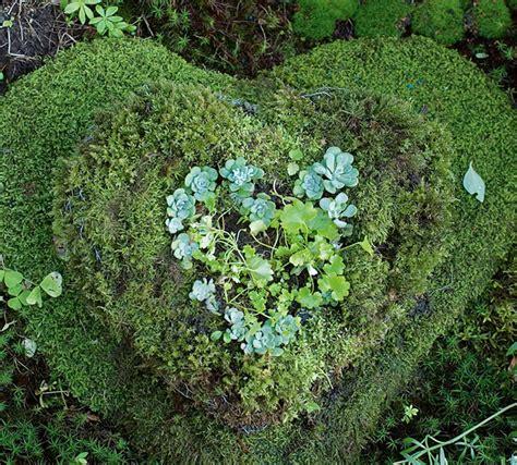 Planter Moss by Make A Moss Planter New Zealand Handyman Magazine