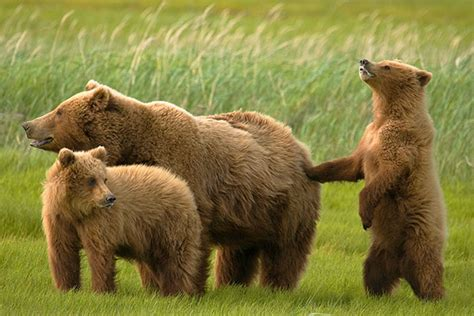fotos animales mamiferos mam 237 feros omn 237 voros animales omn 237 voros