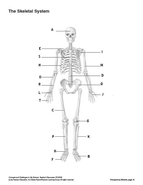 printable label the skeleton homeschooling free the skeletal system label the bones