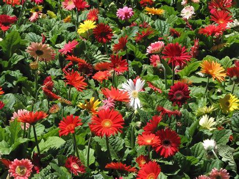 Best Fertilizer For Flower Garden The Best Fertilizer For Your Vegetable Garden 17 Best Images About Gardening Dirt Mulch