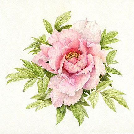 flowers in colored pencil 1600582397 flower drawings in pencil colour colored pencil peony final tattoos peonies