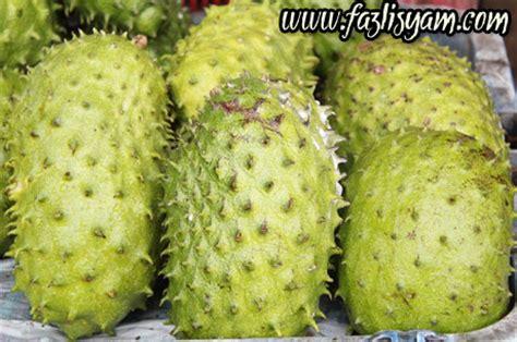 durian belanda khasiat tumbuhan perubatan