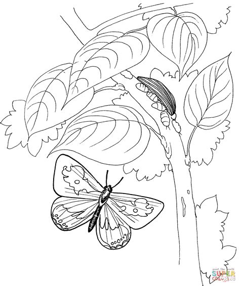 caterpillar butterfly coloring page pretmic com caterpillar and butterfly 2 coloring page free printable