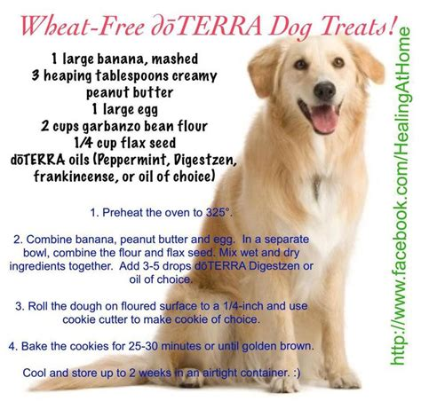 essential oils for calming dogs 92 best doterra essential oils for your pets and farm animals images on