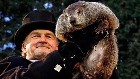 groundhog day canada groundhog day in canada wiarton willie shubenacadie sam