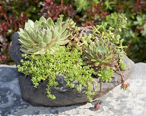 planter for succulents creative succulent planter ideas