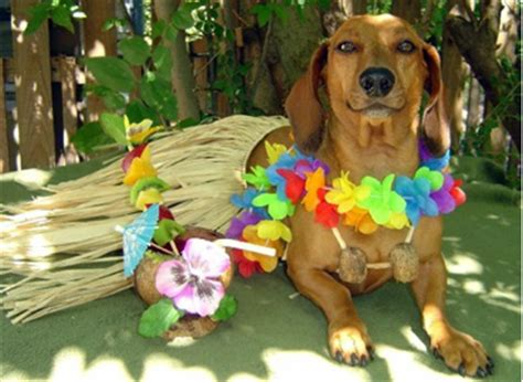 oahu puppies moving your pets to hawaii