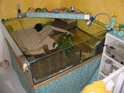 lada terrario akvarium i vardagsrum diverse forum sk 246 ldpaddor