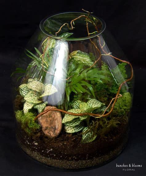 Terrarium Planter by Tropical Plants Succulent Terrariums