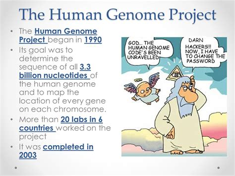 section 13 2 the human genome project chapter 13 gene technology ppt video online download