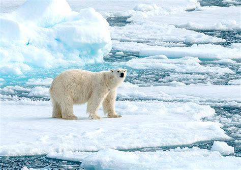 the polar bear explorers 0571332544 high arctic explorer bunnik tours