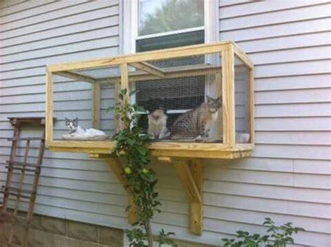 cat veranda window box cat window box diy images