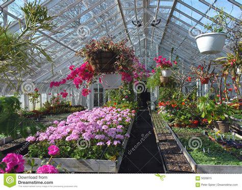 serra per fiori serra per fiori serre per ortaggi e fiori serre surra