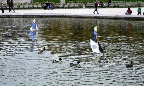 sailboats and ducks at luxembourg gardens in paris france - Sailboats At Luxembourg Gardens